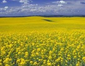 Toekomst voor biodiesel? (2000-11)